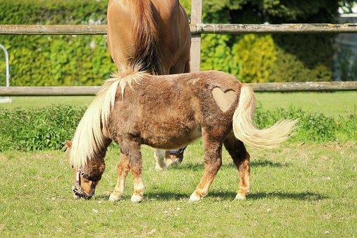 Horse, Pony, Heart, Cute, Animal, Funny, Seahorses