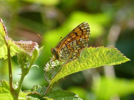 Butterfly, Detail, Beauty, Yellow Butterfly