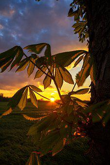 Gelsenkirchen, Resser-mark, Sunset, Mood, Evening Sky