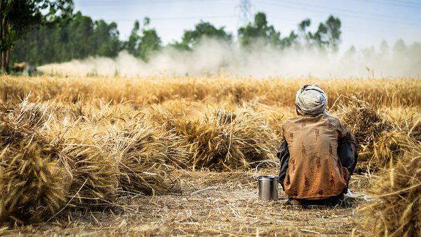 Farmer, Wheat, Crop, Agriculture, Field, Nature