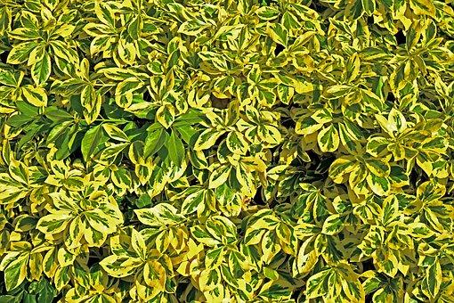 Green, Leaves, Nature, Leaf, Green Leaf, Green Leaves