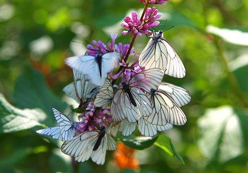 Instinct, Butterfly, Spring