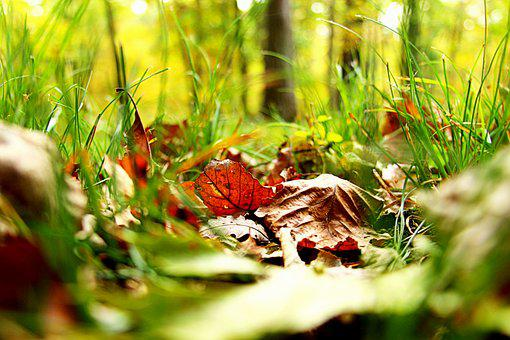 Leaves, Fall, Grass, Fall Leaves, Autumn