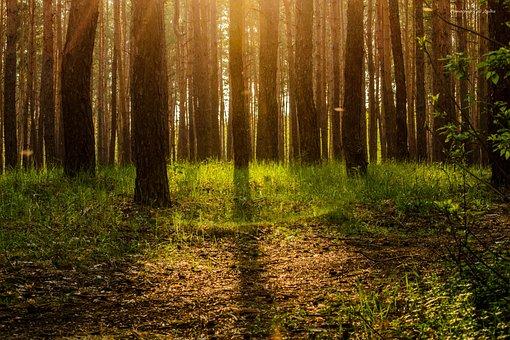 Forest, Ecology, Tree, Magic, Story, Leaves, Bark
