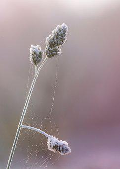 Blade Of Grass, Ear, Grass, Plant, Close, Macro