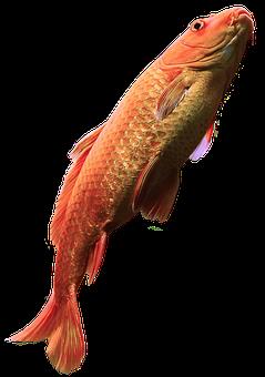 Fish Free, Water, Aquarium, Fischer, Nature, River