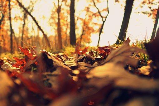 Fall, Leaves, Cold, Autumn, Fall Leaves, Season, Orange