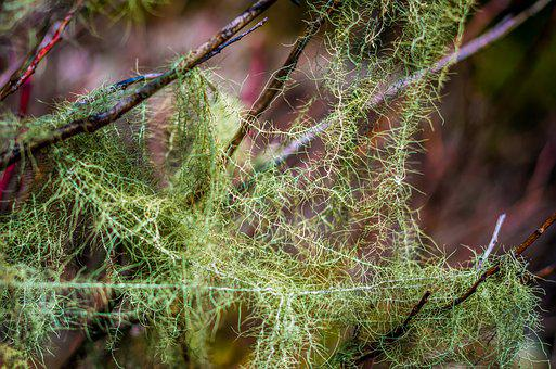 Moss, Tree, Green, Branch, Forest, Rize, Turkey, Nature