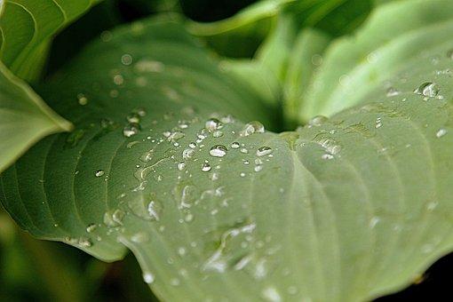 Dew, Leaf, Spring, Green, Nature, Water, Fresh