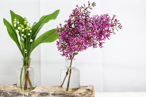 Thrush, Lilac, Flower, Bell, Spring, 1 ° May