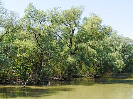 Riparian Zone, World Heritage Site, Danube Delta