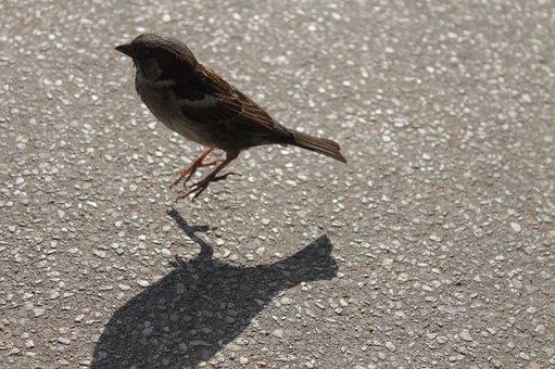 Bird, Jumping, Nature, Jump, Natural, Wildlife, Animal