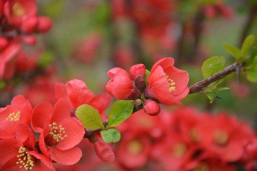 Campus, Flower, Spring