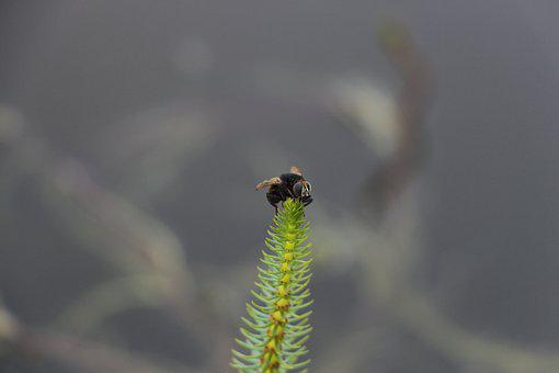 Flie, Small, Plant, Water