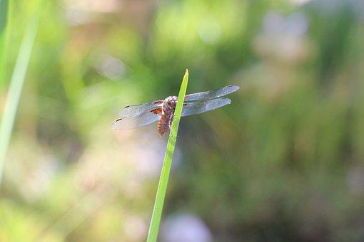 Dragonfly, Lake, Summer, Green, Sunshine