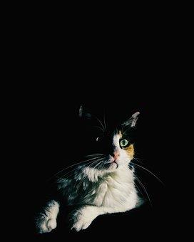 Cat, Gata, Portrait, Friend, Animal, Kitten, Look, Rest