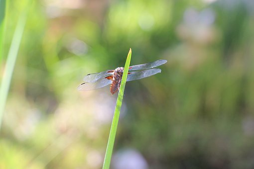 Dragonfly, Lake, Summer, Green, Sunshine, Lagoon