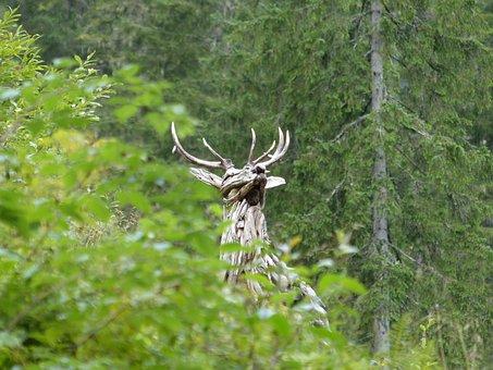 Hirsch, Forest, Meadow, Wild, Fallow Deer, Nature