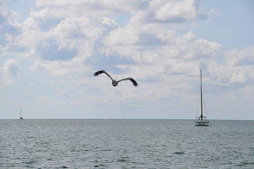Nature, Pelican, Boat, Beira Mar, Agua, Orla