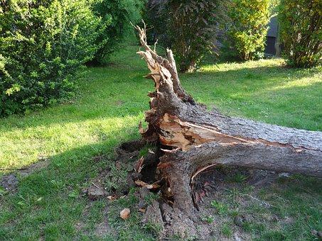Overturned, Broken, Storm, Storm Damage, Tree, Uprooted