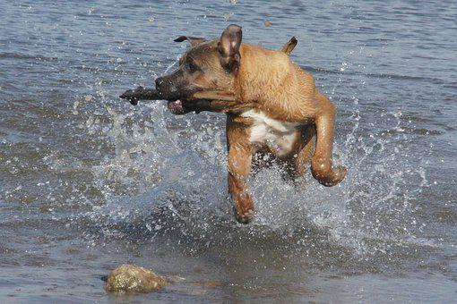 Dog, Water, Fetch, Summer, Swimming, Toy, Activity