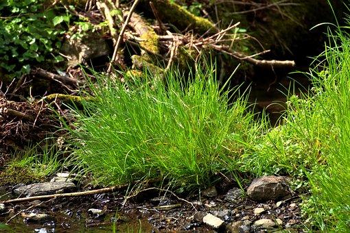 Grass, Nature, Wilderness, Bach, River, Grasses, Frisch