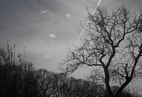 Black White, Bw, Black-white, Park, Pg, Gorky Park, Sky