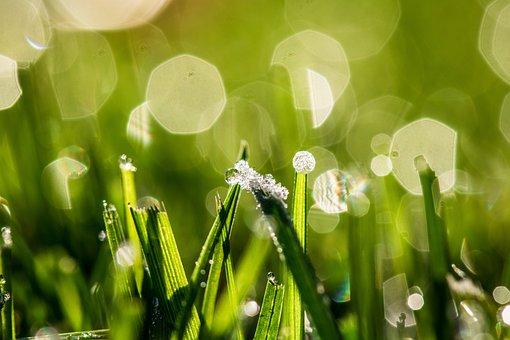 Bokeh, Dewdrop, Frozen Morning Dew, Drop Of Water, Drip