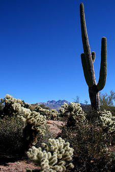Saguaro, Cactus, Mountains, Cholla, Landscape