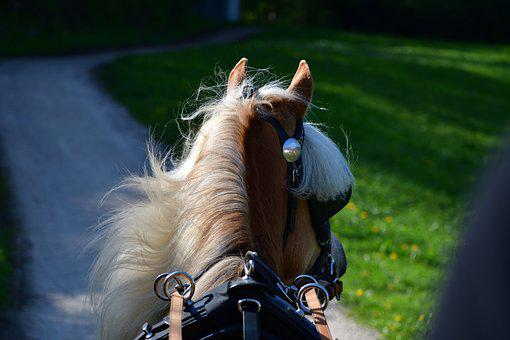 Horse, Coach, Team, Travel, Nostalgia, Draft Horses