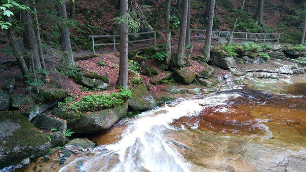Harrachov, Forest, Water, Path, Nature