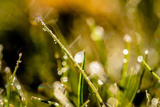 Frozen Dew Drops, Dewdrop, Drip, Ice, Frozen, Cold