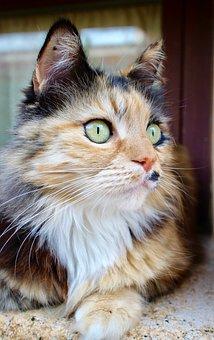 Cat, Animals, Feline, Pet, Look, Domestic Cat, Hair