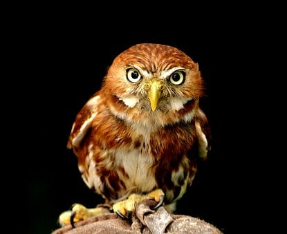 Owl, Portrait, Bird, Animal World, Night Active