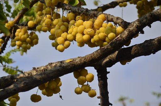 Fruits, Intestinal Beam, Cherry, Citrus Fruits, Sour