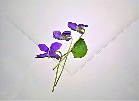 Envelope, Violet, Small Flowers, Purple, Viola, Spring