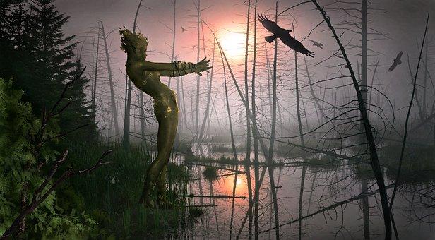 Forest, Evening, Water, Nature, Abendstimmung