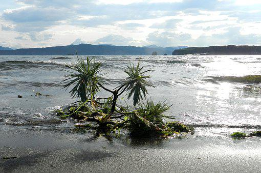 Kamchatka, Avacha Bay, Bay, Beach, Sea, Water, Journey