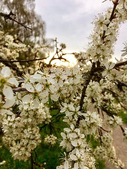 Flowers, Spring, Weissdorn, Branch, Full Bloom