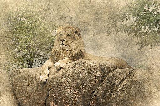 Lion, Lying Down, Rock, Art, Vintage, Animal, Nature