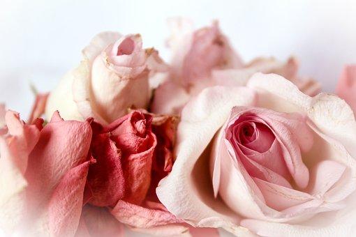 Roses, Nostalgic, Playful, Romantic, Shabby Chic