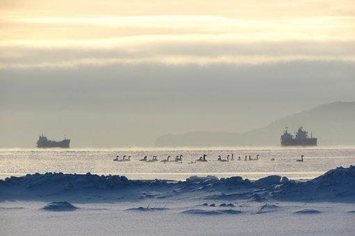 Kamchatka, Bay, Ships, Beach, Swans, Sunrise, Sunset