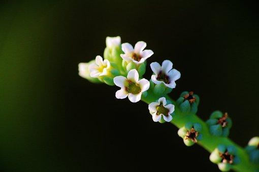 Flower, Green, Nature, Plant, Summer, Leaf, White