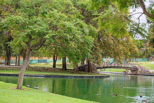Park, Green, Tranquility, Trees, Peaceful, Water, Ducks