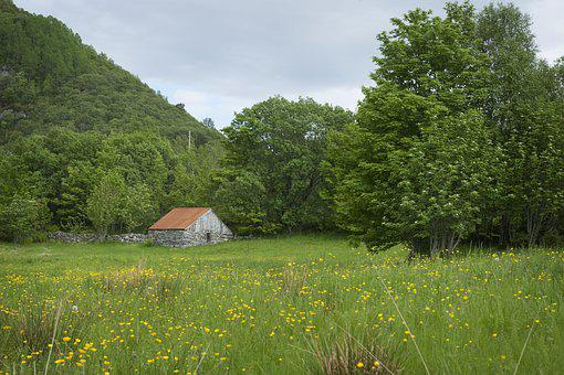 Meadow, Seals, Utløe, Trees