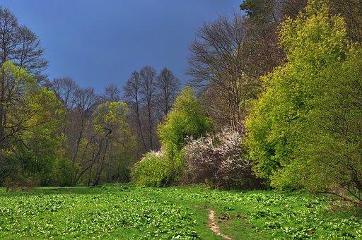 Polyana, Forest, Tree, Valley Sąspówki, Poland, Nature