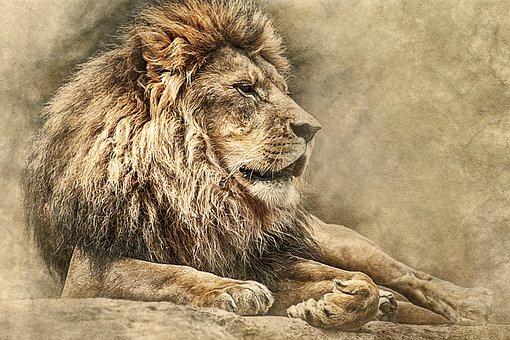Lion, Lying Down, Art, Vintage, Scrapbooking, Paper