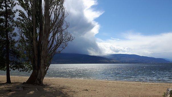 Lake, Water, Beach, Landscape, Based, Tree