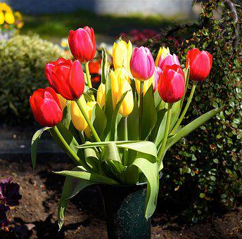 Tulips, Colorful, Flowers, Spring, Bouquet, Bloom