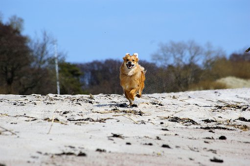 Dog, Run, Quick, Joy, In A Hurry, Post Haste, Beach